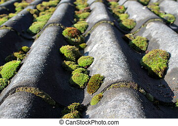 Mossy eternit roof