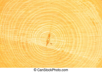 Cross-section of tree trunk