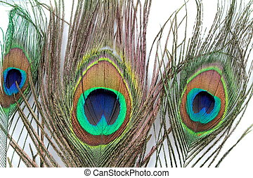 Peacock feather ,close up image