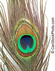 Peacock feather close up image