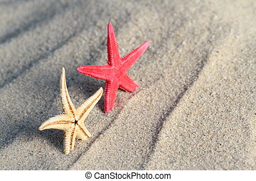 Starfishes on beach sand