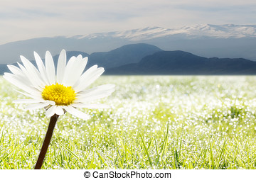 in front a flower and background mountains - in front a...