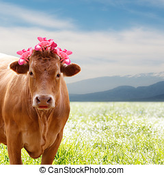 beautiful brown cow with flowers - beautiful brown cow in...