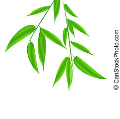 Bamboo leaves pattern with space for your text -...