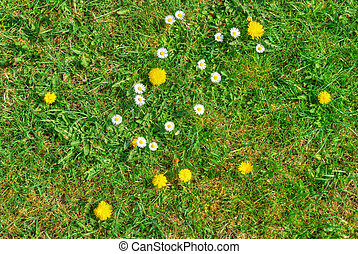 Grass texture with blooming flowers in spring