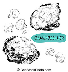Cauliflower Set of hand drawn graphic illustrations