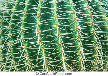 Green cactus with long thorns in detailed view