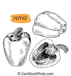 Pepper Set of grahpic hand drawn illustrations