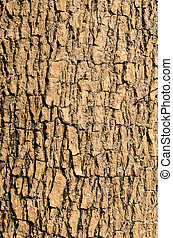 Bark of Elm tree use as background Texture