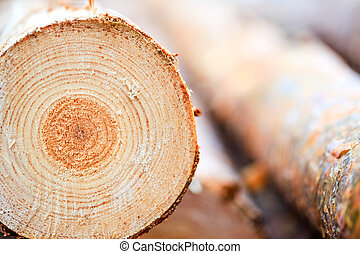 Annual rings on sawn pine tree timber wood texture...