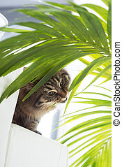Beautiful cat with plant - Beautiful cat eating houseplant...