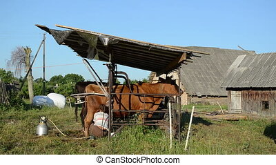milkmaid milk machine cow - milkmaid dairymaid farmer woman...