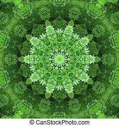 verde,  Mandala, estrela