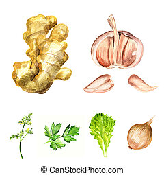 Condiments - Watercolor image of different condiments and...