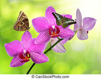 purple orchid with butterflies on green background