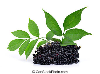 Elderberry ( Sambucus nigra ) isolated on white