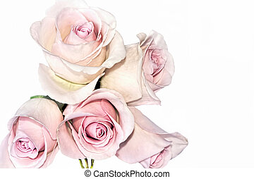 Classic Long-Budded Silvery Pink Tea Roses - Five Soft Pink...