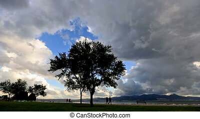 Rain clouds and tree