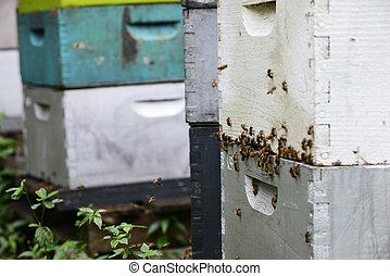 aviary - bees flying around hives at aviary