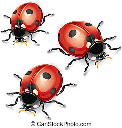 Ladybugs. vector illustration.