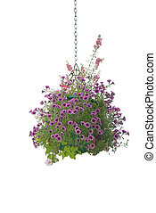 Flower hanging basket isolated on white background