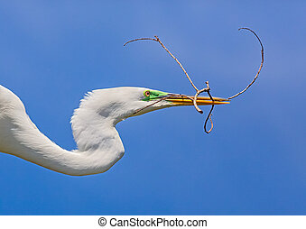 Egret with Twig - A great egret flies with a twig in it...