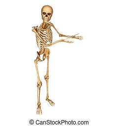 Human skeleton - 3d rendered illustration of Human skeleton