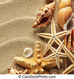 Sea shell on sand - sea shells with sand as background