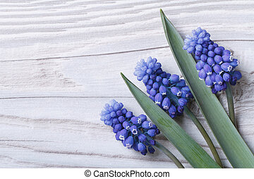 Holiday card from spring blue muscari flowers