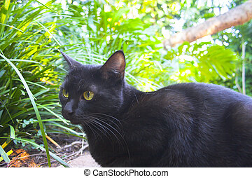 Predator cat - Black cat hunting in the garden of Hemingway...