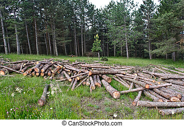 freshly cut tree trunks piled up in forest