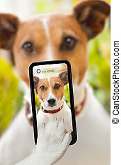 dog selfie - dog taking a selfie with a smartphone