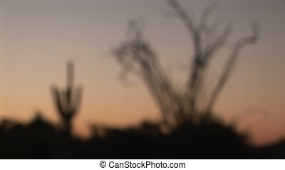 Saguaro and Ocotillo coming into focus - Desert sunrise,...