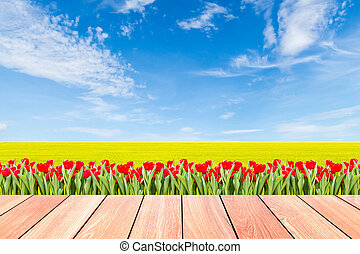 tulips with green rice field against blue sky and plank wood