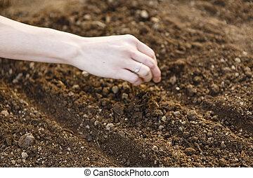 mulher, mão, semear, semente