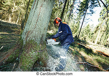 Lumberjack cutting tree in forest - Lumberjack logger worker...