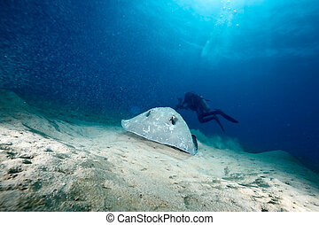 ocean, sun and porcupine ray