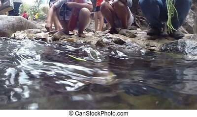 Fishes feeding. Video