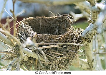 Empty Nest - A bird nest that was abandoned and left empty...