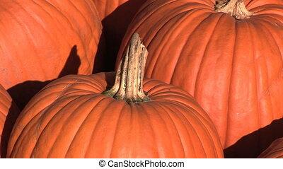 Pumpkins! - Pumpkins, Portland, Oregon, zoom in