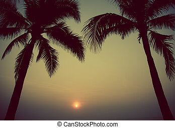 tree sunset - Palm trees on the beautiful sunset background...