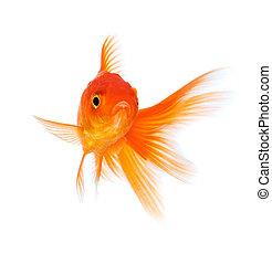 Images photographiques de poisson rouge 13 355 for Achat poisson rouge nice