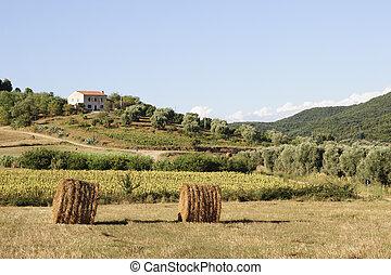 Tuscany lanscape