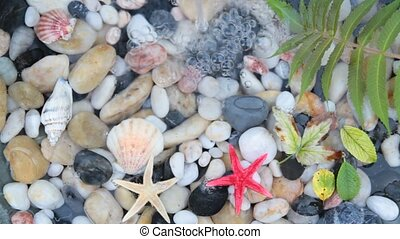 pebble stones and starfish seashell - Fountain plash on...