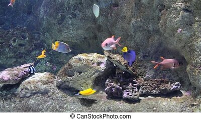 Colorful tropical fishes - Underwater scene with colorful...