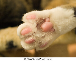 Cat paw - Close up of the underside of a cats paw