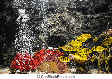 fishes swimming in aquarium - different colorful fishes...