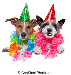 two funny birthday dogs celebrating close together as a...