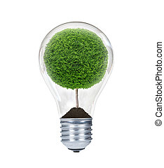 The tree inside of the light bulb isolated on white.