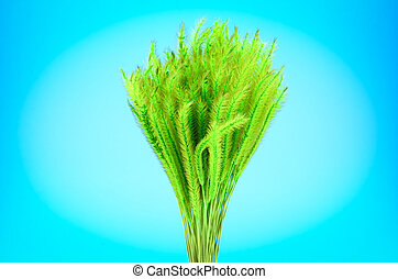 Feather Grass or Needle Grass, Nassella tenuissima isolated on blue